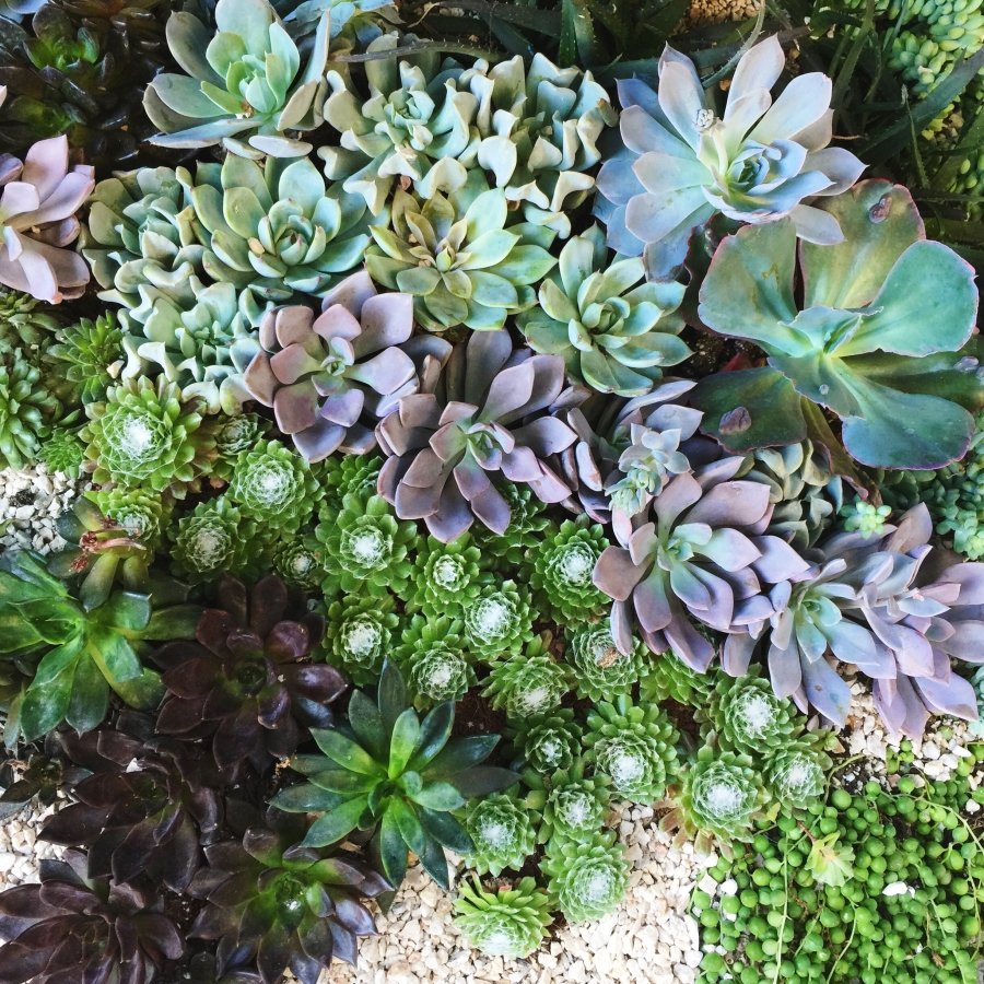 Succulents were everywhere! I loved this!