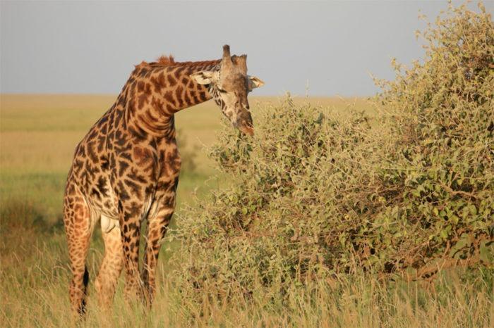 On Safari in Tanzania with Four Seasons thumbnail