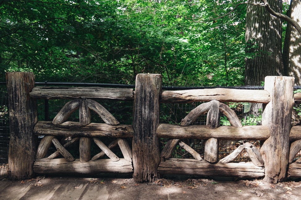 Focus on Brooklyn: Early Fall in Prospect Park