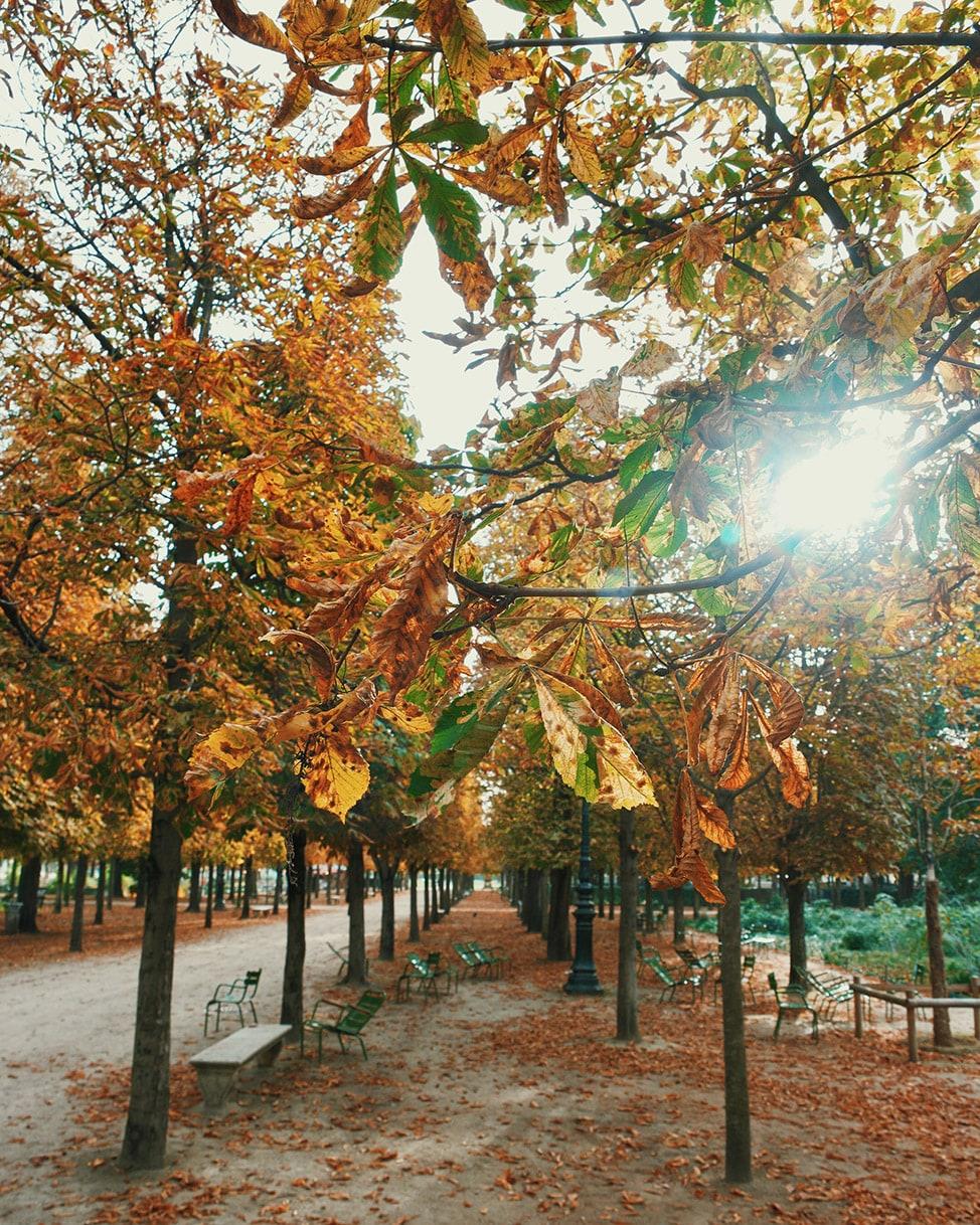 fall leaves paris top 10 instagram photos 2016