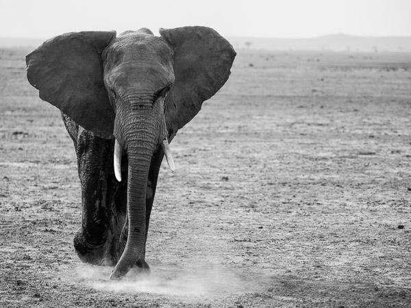 #DontLetThemDisappear from Africa