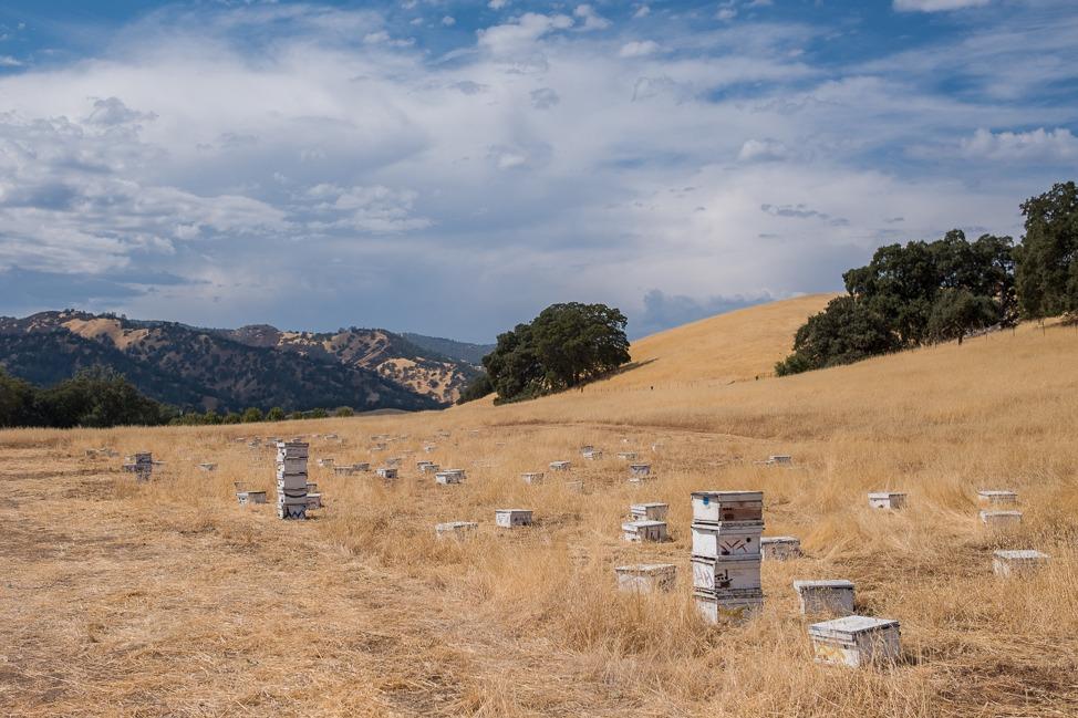 Visiting Central Valley – a California Rural Region