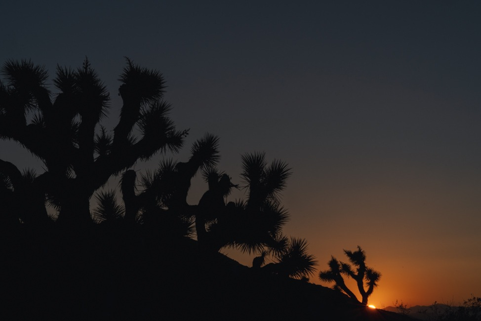 Tips for Visiting Joshua Tree National Park by Kirsten Alana